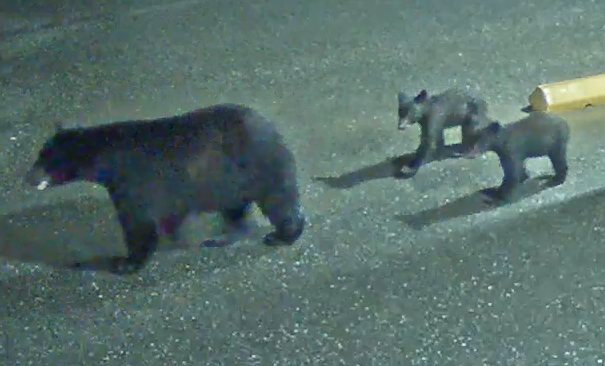 3 Bears Came for a Visit